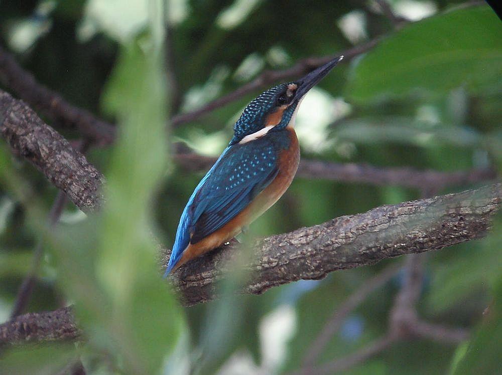 木陰の幼鳥1